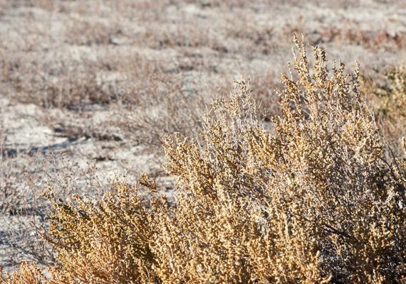 A kiszáradt tó sós pusztaságot hagyott maga után, melynek mérgező anyagai súlyosan károsítják a közelben élők egészségét.