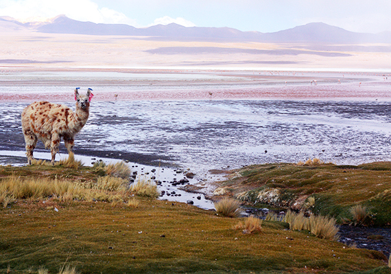 Az Atacama-sivatag gyéren lakott területnek számít, azonban sajátos élővilága magával ragadó.