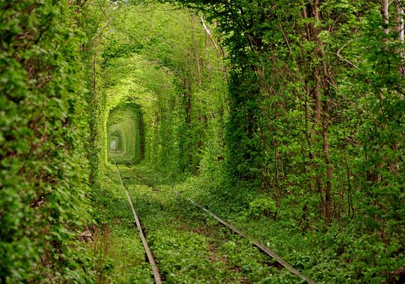 Úgy tartják, azok a szerelmesek, akik az ukrajnai Love Tunnelben, vagyis a Szerelemalagútban sétálnak, sokáig boldogok lesznek.