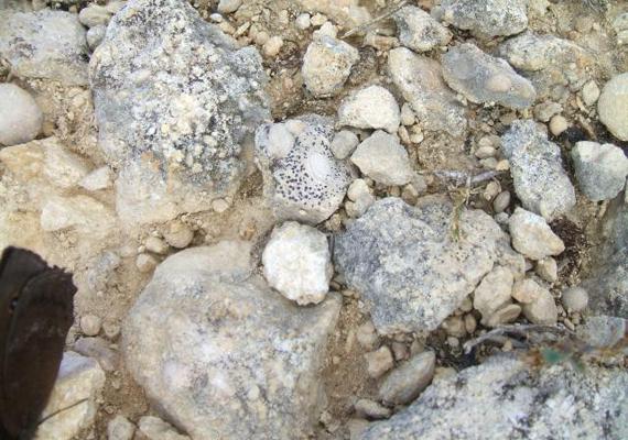 Ezek nem egyszerű kövek, hanem Szent László pénzei, melyek 40-50 millió éves eukarióta egysejtűek megkövesedett maradványai. A monda szerint a kunok úgy próbálták meg elvonni a magyar vitézek figyelmét, hogy aranyat szórtak maguk köré. Szent László fohásza révén azonban ezek kővé változtak, így végül a magyaroknak sikerült legyőzniük a cselhez folyamodott ellenséget.