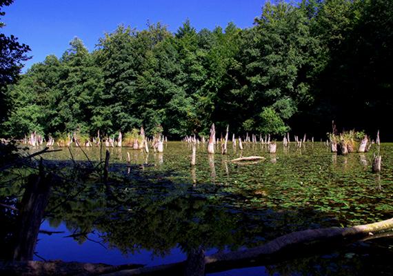 A Hubertlaki-tó egy mesterségesen felduzzasztott tó a Somberek-séd völgyében, melyre a vizéből kiálló fatönkök is utalnak. A kinézete nagyon hasonlít a romániai Gyilkos-tóéhoz, a látnivalót ezért bakonybéli Gyilkos-tónak is nevezik.