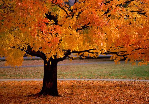 New England gyönyörű őszi tájairól híres. Kattints ide a nagy felbontású képért!