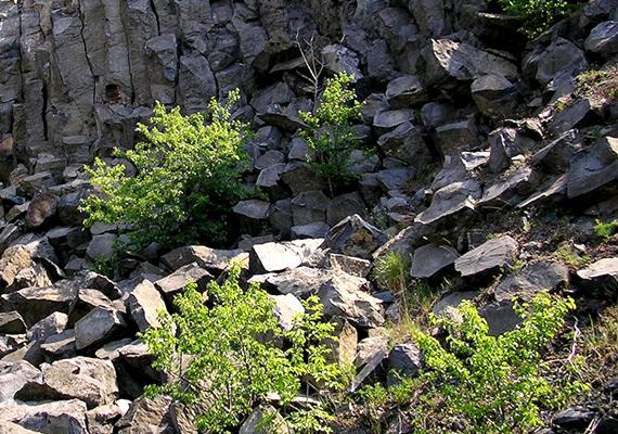Bár a bányászat miatt mára jelentős része tűnt el, a Haláp-hegyen is gyönyörűen megfigyelhetőek a bazaltképződmények.