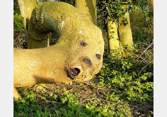 A vicces kedvükben lévő angolok úgy gondolták, szórakoztató dolog a fába egy arcot égetni. A furcsa teremtmény a kenti Blue Bell-hegyen él.