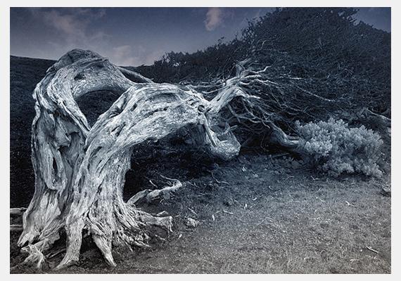 Szintén a Kanári-szigeteken fotózták le ezt a fát - úgy néz ki, mintha komoly fájdalmai lennének.