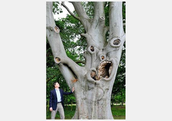Az angliai Bury St. Edmunds közelében látható ez a furcsa, ijesztő arcú fa.