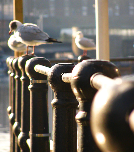 Bristolt az Avon-folyó szeli ketté. Bár rövid tengerparttal és hozzá kikötővel is rendelkezik, a sirályok a belvárosban is szívesen vendégeskednek.