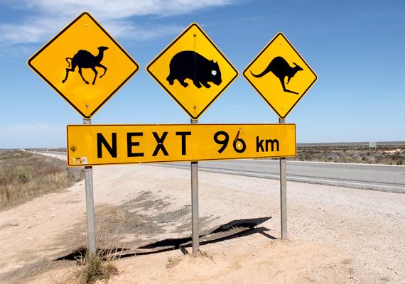 A Bunda-sziklák a híres ausztráliai Nullarbor-síkság déli határát jelentik, mely több mint 200 ezer négyzetkilométeres területével nem más, mint a világ legnagyobb egybefüggő mészkőformációja.