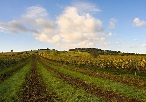 Az egykor Magyarországhoz tartozó terület Ausztria legnaposabb szeglete, amely egész évben csodaszép, egyúttal tökéletes úti cél a turisták számára, akiket tavasszal virágba borult mezőkkel, nyáron aranyló gabonaföldekkel, ősszel szőlőültetvényekkel, csodás színekkel, remek borokkal és fesztiválokkal, télen pedig havas idillel vár.