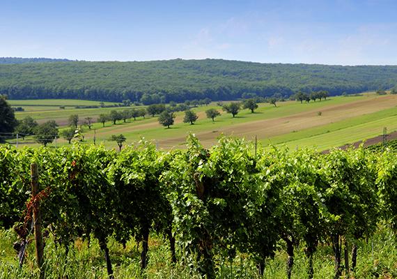 Burgenlandnál aligha lehetne kiválóbb úti célt találni, ha az utazót legalább annyira vonzzák a gasztronómiai élmények, mint a történelmi, kulturális és természeti látnivalók. A burgenlandi borok nem véletlenül számítanak világhírűnek - a napsütéses lankák tökéletes körülményeket jelentenek a szőlőtermesztéshez -, a környék tökéletes egységét alkotja a modern borászatnak, illetve a legősibb hagyományoknak.