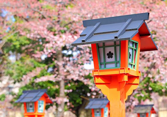 A hanami hagyományos kiegészítőinek számítanak a színes lámpások, lampionok. Kattints ide a háttérképért!