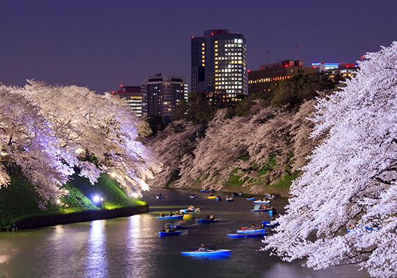 A helyiek úgy tartják, boldogság kíséri azt, akinek a vállára cseresznyevirág-szirom hull. Kattints ide a háttérképért!