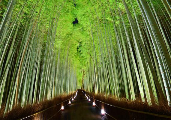 BambuszerdőA Kiotóban, Japánban található meseszép bambuszerdő szürreális látványban részesíti az oda látogatókat. Az éjjeli kivilágítás még különlegesebbé teszi a hely atmoszféráját.