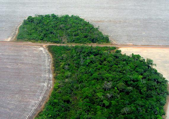 A nagymértékű erdőirtás hatalmas károkat okoz az Amazonas esőerdőiben. Nézd meg korábbi összeállításunkat a helyekről, melyek 12-15 éven belül eltűnhetnek!