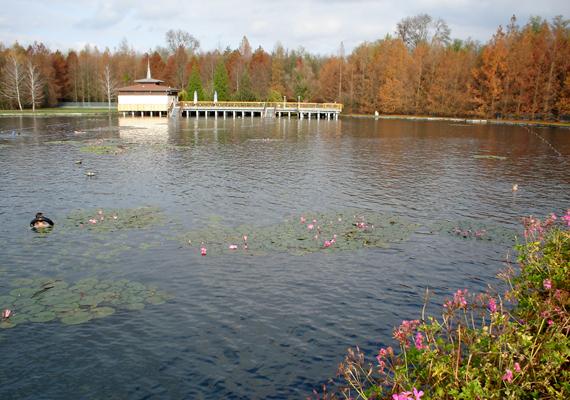 Zala megye gyöngyszeme, Hévíz nem messze a Balatontól, festői környezetben várja a magyar és külföldi turistákat ősszel is.