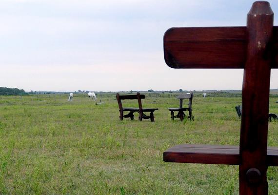 A Kincsem Lovasparkban található Attila-domb szintén kedvelt zarándokhely a gyógyulni vágyók körében, energiáinak köszönhetően. Kattints ide, korábbi cikkünkből többet is megtudhatsz.