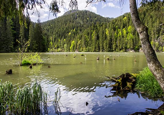 Legalább ilyen híres azonban a szintén Hargita megyében fekvő Gyilkos-tó is, amely 1837-ben jött létre, miután a Gyilkos-kőről lezúduló törmelék több patak folyását is elzárta. A legenda szerint egy nyájat és pásztorát is maga alá temette, ennek köszönheti nevét is.