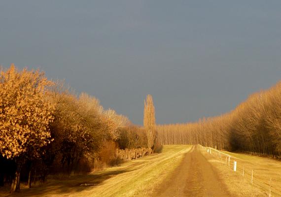Nemcsak maga a domb, de Fegyvernek környéke is meseszép ősszel.