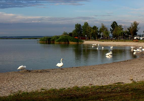 A Fertő-tó magyarországi részének védelmére a Fertő-Hanság Nemzeti Park ügyel, melynek több tanösvénye is arra szolgál, hogy a látogatók megismerjék a környék különleges élővilágát, geológiai, zoológiai és botanikai értékeit.