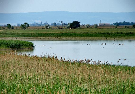 Bármilyen különleges is azonban természeti adottságait tekintve, a Fertő-tó és a körülötte található falvak kultúrtájként kerültek fel az UNESCO Világörökség listájára. A hivatalos magyar honlap szerint ez részben annak köszönhető, hogy a tó környéke nyolcezer éve a különböző kultúrák találkozópontja, ahol az emberi tevékenység és a földrajzi környezet evolúciós szimbiózisának eredményeként egy egyedi kulturális tájegység alakult ki. A természeti értékek mellett továbbá kiemelik a figyelemre méltó népi építészetet, valamint a 18-19. századi kastélyok jelentette kulturális örökséget is.