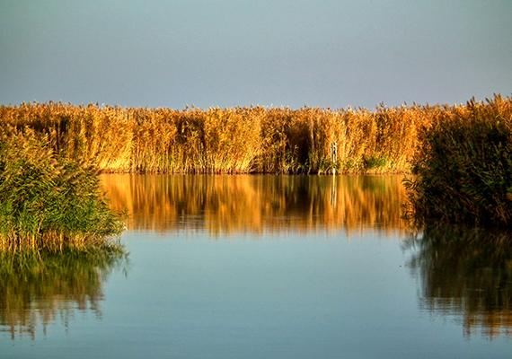 A sűrű nádasoknak köszönhetően a Fertő-tó igazi madárparadicsomot jelent, melynek megfigyelésére a Fertő-tavon vízi tanösvény is működik, egy hat kilométer hosszú kenutúra keretében járható be a nádasba vezető, Vízi rence tanösvény. Kattints ide, és többet is megtudhatsz a tanösvényekről!