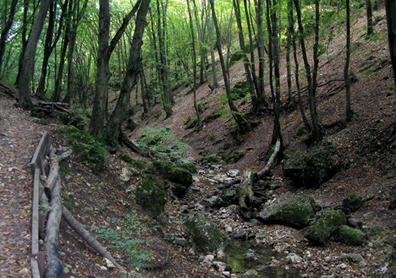 Geológiai szempontból az egyik legkülönlegesebb magyar helyet jelenti a Dera-szurdok is, amely egy, a Visegrádi-hegység vulkanikus kőzeteit és a Pilis mészkőszirtjeit elválasztó törésvonal mentén helyezkedik el. Még több képért kattints ide!