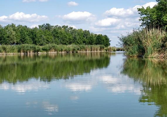 A Bács-Kiskun megyei Szelidi-tó ugyancsak remek alternatíva, ha gyerekekkel indulnátok nyaralni, a tó körül például tanösvény segítségével lehet megismerni a helyi élővilág titkait.