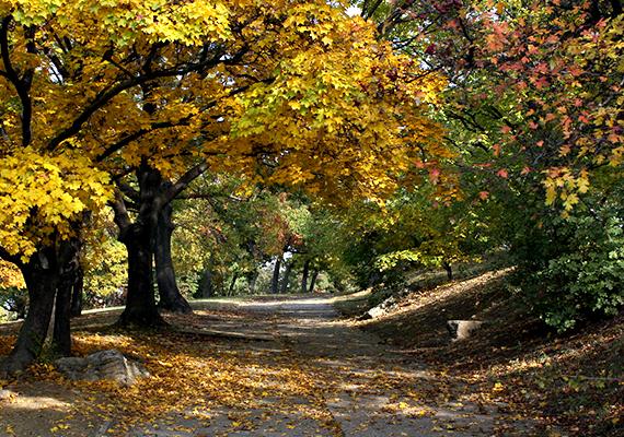Megannyi látnivalója mellett sétányai miatt is érdemes a Gellért-hegyre látogatni, ősszel például különösen gyönyörű.
