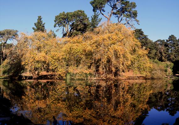 A park egy másik híres állóvize a Mallard-tó.