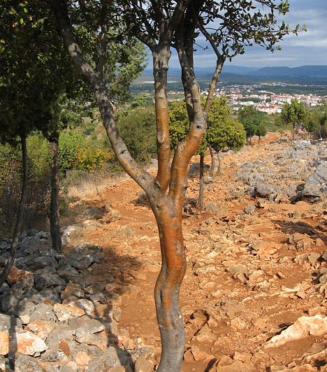 Medzsugorje, Bosznia-HercegovinaMedzsugorje egyike a világ leghíresebb zarándokhelyeinek, köszönhetően a Szűz Máriához köthető jelenéseknek, illetve a neki tulajdonított csodálatos gyógyulásoknak. A hely energiái a csupán kirándulni vágyó turistákból is különleges érzeteket váltanak ki.