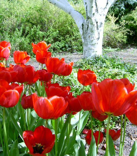 Budai Arborétum  A Budapesti Corvinus Egyetem budai campusának kertészetét 1975-ben nyilvánították természetvédelmi területté. A mediterrán és szubtrópusi növénykülönlegességekben is gazdag arborétumban több mint 1400 növényfaj, több száz hagymás virágféle és 250-fajta dísznövény nyugodt környezete várja a látogatókat.