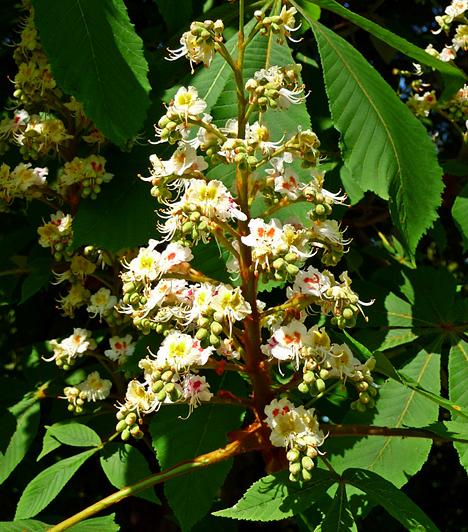 Gödöllői ArborétumA főváros közelében fekvő arborétumot a Gödöllői Erdőgazdaság alapította 1902-ben, azzal a céllal, hogy hazánkban nem honos fenyőfajtákat honosítsanak meg, gazdagítva ezzel a környék növényvilágát. A ma 347 hektáros kert több mint 800-féle fa- és cserjefajnak ad otthont.