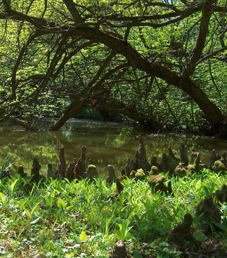 Vácrátóti ArborétumA Veresegyházi-medencében található Vácrátóti Arborétum Magyarország egyik legnagyobb botanikus kertje, ahol a leggazdagabb hazai élőnövény-gyűjteményt csodálhatod meg. A botanikus kert központja a kastélypark, mely tovább fokozza az arborétum semmihez sem fogható hangulatát.