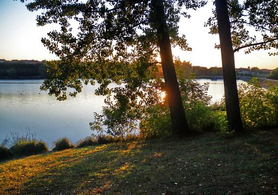 A pécsi Malomvölgyi Arborétumban található a Malomvölgyi-tó, mely a lehető legzöldebb és legnyugodtabb környezetben kínál pihenési lehetőséget. Érdemes ellátogatnod ide, ha relaxálnál a jó levegőn.