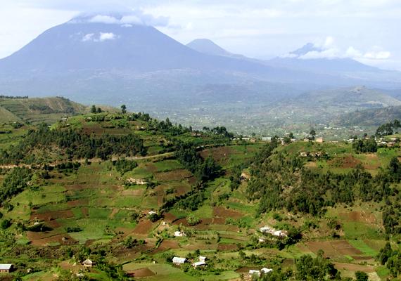 A Virunga-vulkánok vidéke Afrika zöld, izzó szíve, mely vadvilágáról is híres.