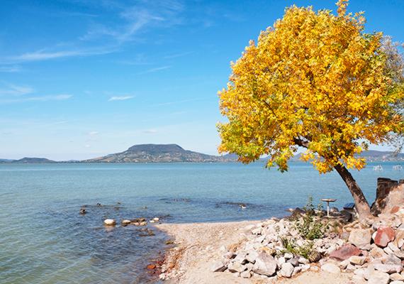 A tompább fényeken kívül csupán a magányos fa színeváltozása hirdeti az őszt. A nagy felbontású képért kattints ide!