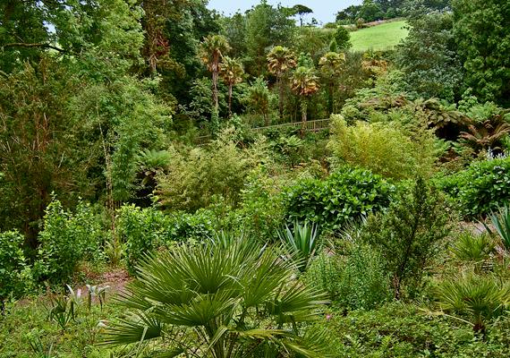 A Cornwallban, Mevagissey mellett található kertet a Cornish Tremayne család tagjai hozták létre a 18. és a 20. század eleje között.