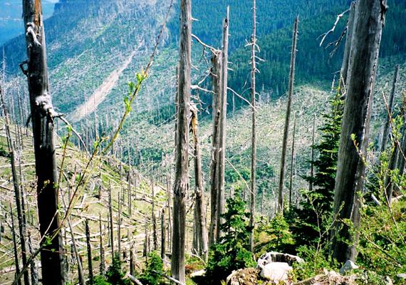Az Észak-Amerikában, a Sziklás-hegységben található Mount St. Helen aktivitása miatt a környéken számos hegyoldalt hamuval fedett, halott erdők borítanak.