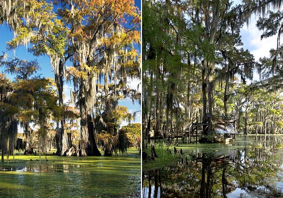 A Caddo-tó területe Texasban a misztikus helyek szerelmeseinek kedvence. A tó fái, bár víz alatt állnak, nagyon is élnek, egyúttal a világ legnagyobb ciprusfaerdejét jelentik.