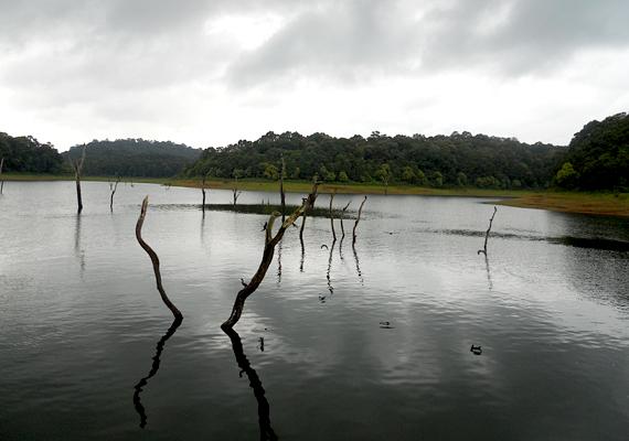 Az indiai Periyar-tó szintén egy erdő temetője. A területet 1895-ben gátépítés miatt, mesterségesen árasztották el.