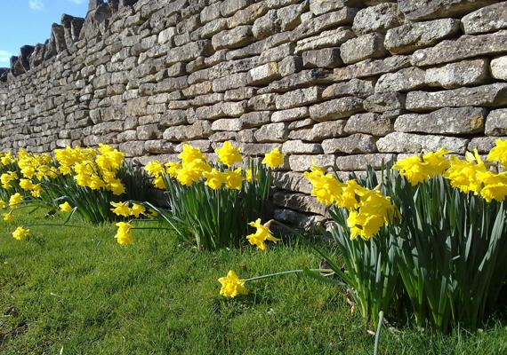 Az angliai Cotswolds a vidék minden ízét magában rejti. Tavasszal nárciszai miatt is sokan látogatnak ide. A háttérképért kattints ide!