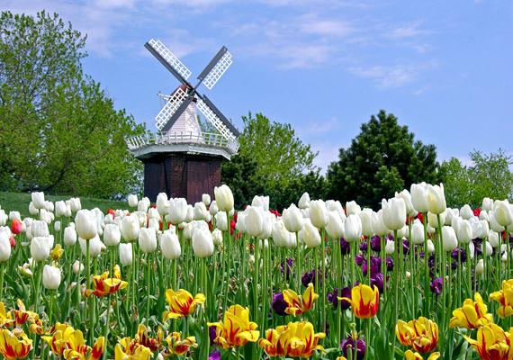 Az amerikai Skagit-völgyben számos virágfarm található. A háttérképért kattints ide!