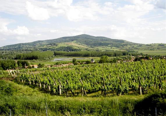 A tokaji borvidéket 2002-ben vette fel az UNESCO a Világörökség listájára. Ez az első zárt borvidék a világon, és a feljegyzések szerint itt készült először aszú is, ami Szepsi Laczkó Máté erdőbényei prédikátor nevéhez fűződik.