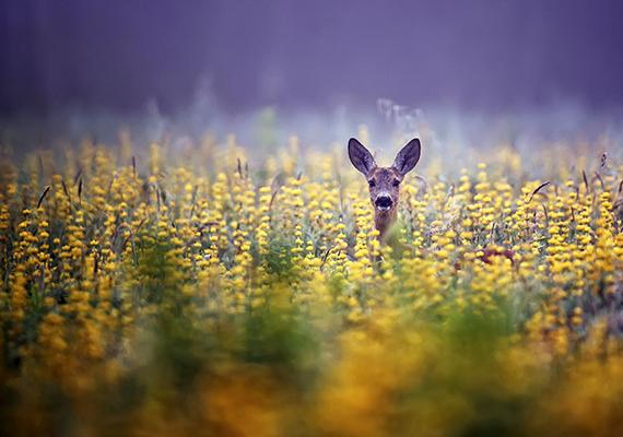 """""""Menjetek ki a természetbe, s ismerjétek meg egymást ott, ahol az ember őszinte lesz."""" Móricz Zsigmond"""