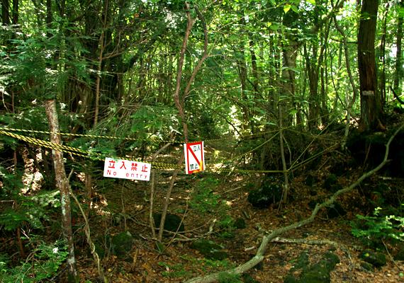 A japán Aokigahara-erdő sötét és félelmetes, mindemellett az itt elkövetett öngyilkosságok magas száma miatt vált ismertté. Csak 2004-ben 108-an vetettek itt véget életüknek.