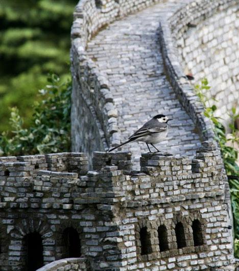 Csak a méretarány kedvéért: ekkora a kínai nagy fal a Minimundusban a barázdabillegetőhöz képest. Ám a madár ettől láthatóan nem jött zavarba.
