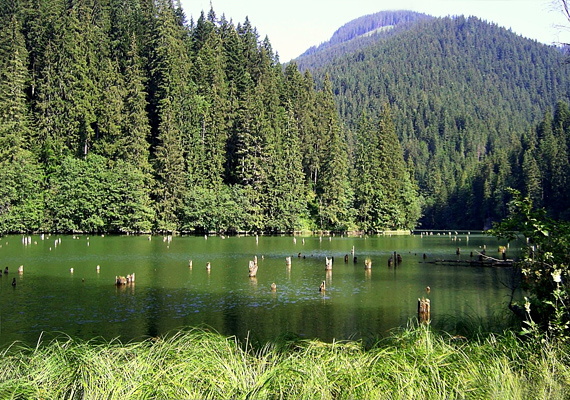 A romániai Gyilkos-tó egy hegyomlás következtében alakult ki. Kilógó fenyőtörzseiről híres.