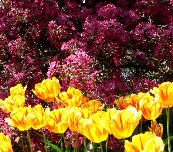 A Gellért-hegy lábánál elterülő, folyton virágzó, rejtett csoda a Corvinus Egyetem budai campusának kertészete.