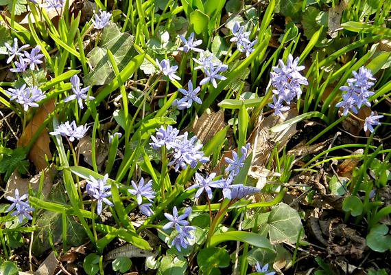 Az ország legjelentősebb növénytani kertje, a Vácrátóti Arborétum már kora tavasszal virágba borul.