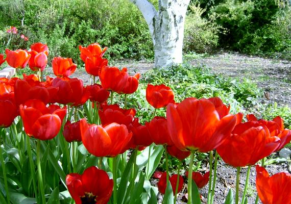 Az arborétumban négyszáz növényfaj, több száz színpompás, hagymás virágféle és 250-féle dísznövény látványa vár.